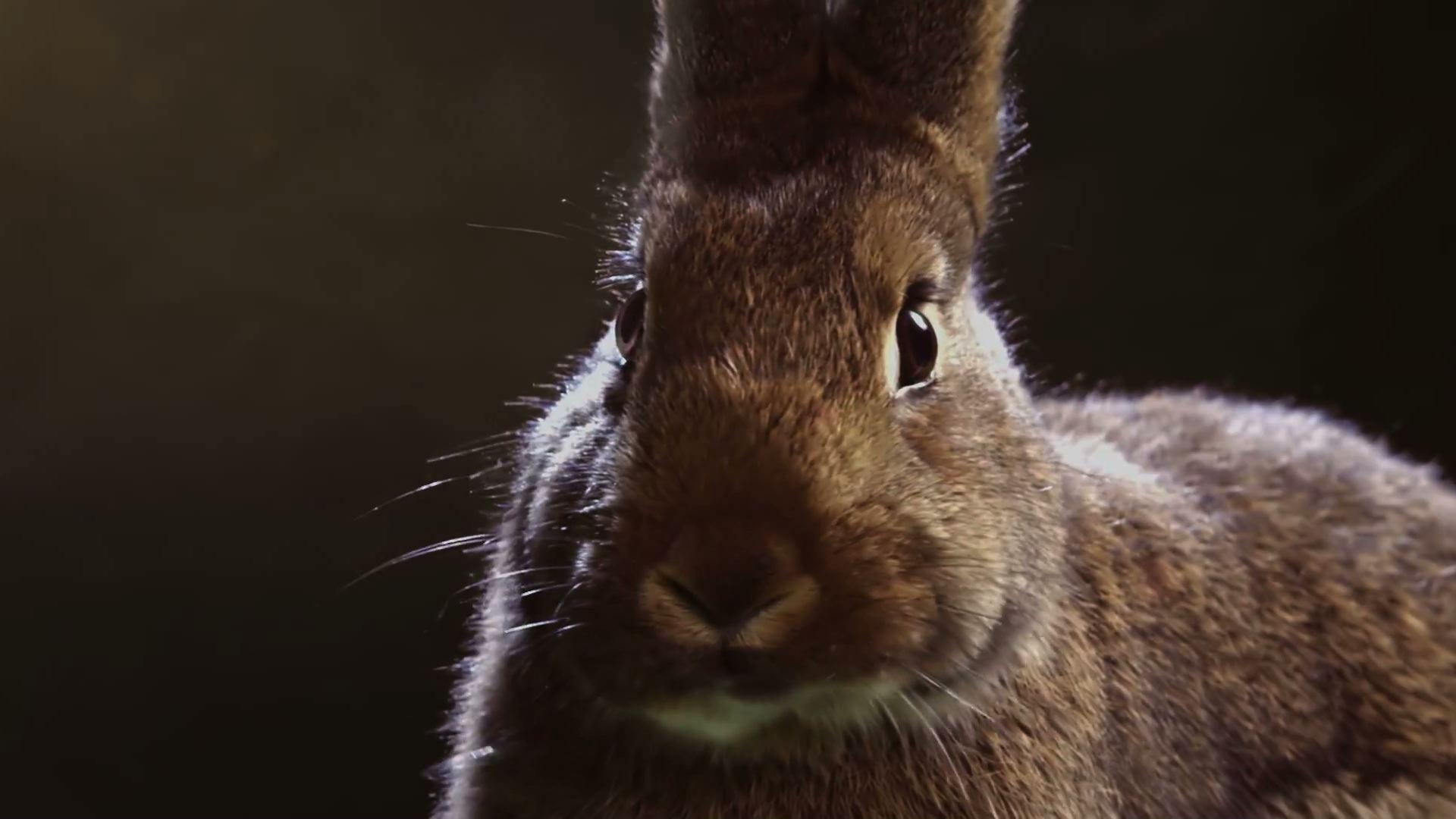 Media Markt Rabbit Race